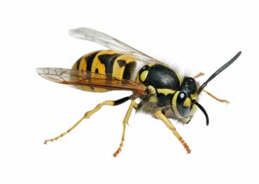 Keeping Your House And Offices Pest Free