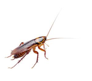 Cockroach-2_106172471