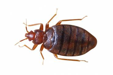 What You Should Never Do When Trying To Get Rid of Bed Bugs