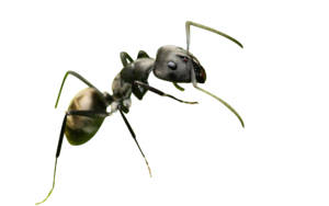 ant_wallpapers